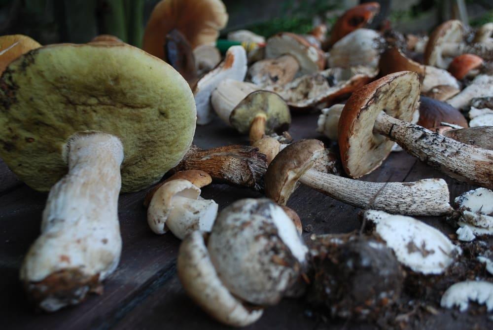 grzyby: prawdziwki, borowiki, rydze