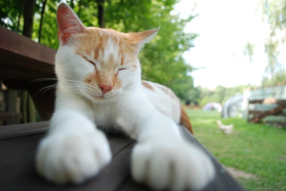 Kot leniwie wygrzewa się na ławce. Kot jest biało cynamonowy.